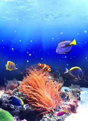 Plakat Podwodne sceny z tropikalnych ryb