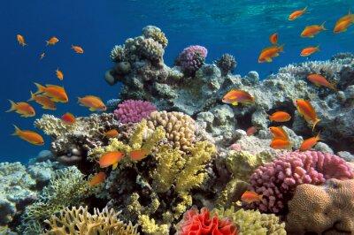 Plakat Podwodne strzelanie żywe rafy koralowej z ryb