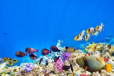 Plakat Podwodny świat z korali i ryb tropikalnych.