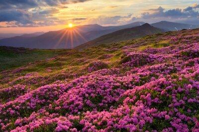 Plakat Pola kwiatów w górach