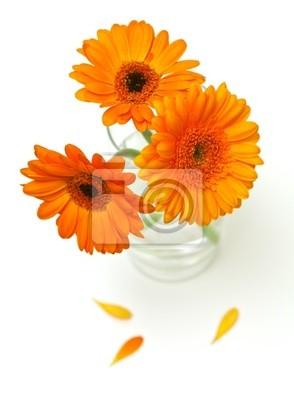 Plakat pomarańczowe kwiaty gerber w szklance