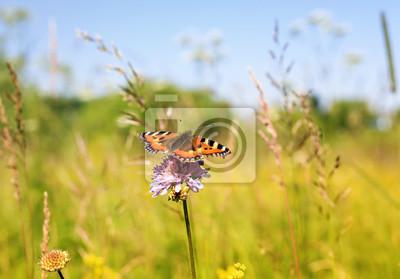 Plakat pomarańczowy piękny motyl na lato łąka siedzi na kwiaty bzu w słoneczny dzień