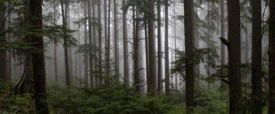Plakat Ponury ciemny las w mglisty dzień. Wykonano w Mt Fromme, North Vancouver, Kolumbia Brytyjska, Kanada.