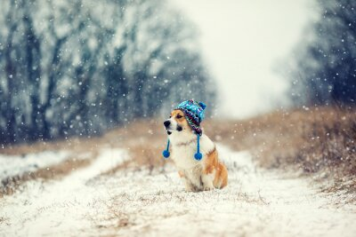 portrait of a cute puppy red dog Corgi sitting in the Park on a winter day in a funny knitted hat during a heavy snowfall