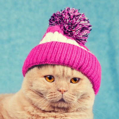 Plakat Portret kota na sobie czapkę z dzianiny z pomponem
