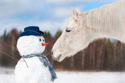 Plakat Portret siwy koń z bałwana