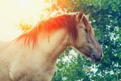 Plakat Portret Wilde konia o zachodzie słońca