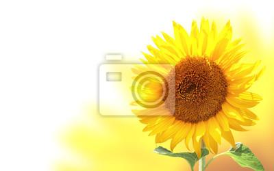 Plakat Poziomy baner ze słonecznikiem