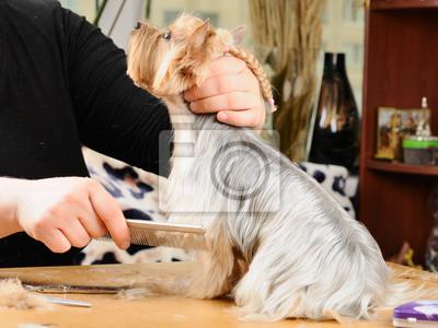 Profesjonalne grooming