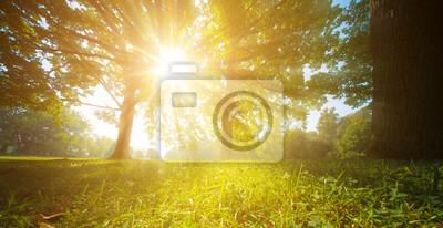 Plakat Promienie słońca przez drzewa liści