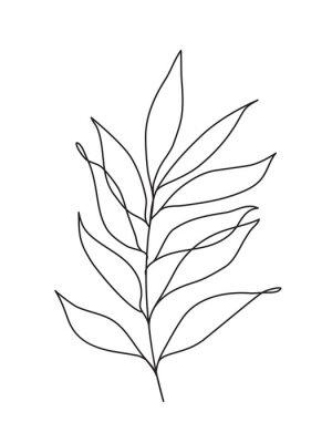 Plakat proste liście eukaliptusa