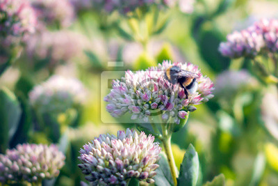 Plakat Pszczoła na kwiat