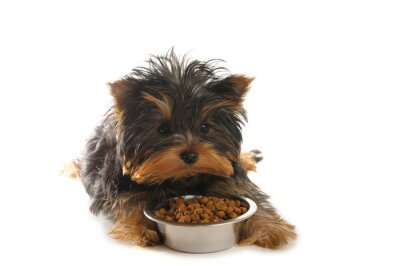 Puppy i żywności