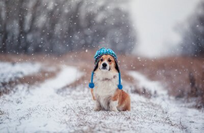 puppy red dog Corgi sits on a walk in a winter Park in a funny knitted hat during snowfall