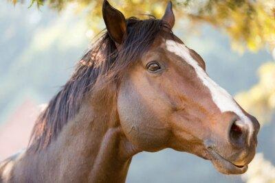 Plakat purebred racing horse