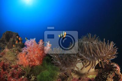 Rafa Koralowa I Ryby Pod Wodą Plakaty Redro