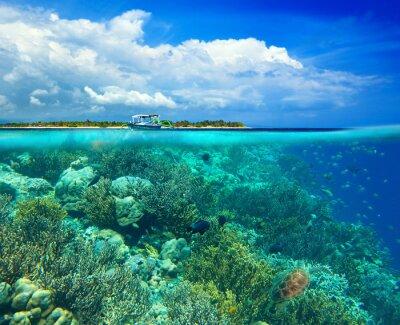 Plakat Rafa koralowa w tle. Podwodna scena