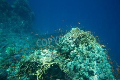 Plakat Rafa Koralowa Z Miękkich I Twardych Korali Z Egzotycznych Ryb 43035447
