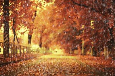Plakat rain background autumn landscape park, abstract seasonal nobody weather october landscape
