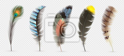 Plakat Realistic bird feathers. Detailed colorful feather of different birds. 3d vector collection isolated on transparent background. Illustration feather bird, peacock fluffy elegance plumage