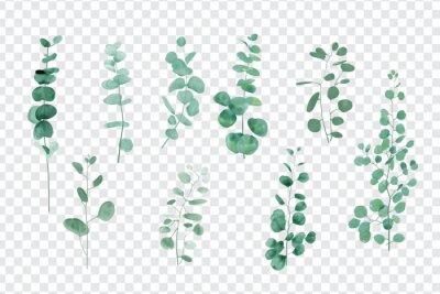 Plakat Realistic eucalyptus set on transparent background