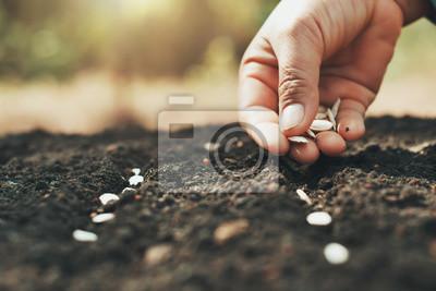 Plakat ręczne sadzenie nasion dyni w ogrodzie warzywnym i lekkie ciepło. koncepcja rolnictwa