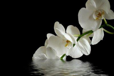 Plakat refleksja kwiaty orchidei