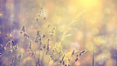 Plakat Retro niewyraźne trawa trawnik o zachodzie słońca z pochodni. Vintage fioletowy czerwony i żółty kolor pomarańczowy efekt filtr. Selektywne fokus używane.
