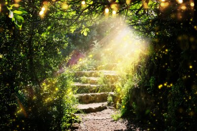 Plakat Road and stone stairs in magical and mysterious dark forest with mystical sun light and firefly. Fairy tale concept