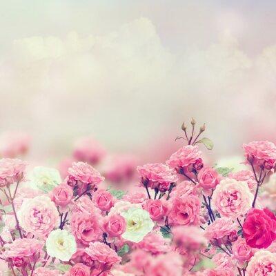 Plakat Rose Kwiaty