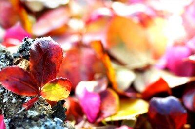 Plakat Rosenlaub im Herbst