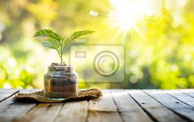 Plakat Rośliny rosnące na stosie nawozów organicznych wewnątrz szkła ze światłem słonecznym i ciepłym środowiskiem
