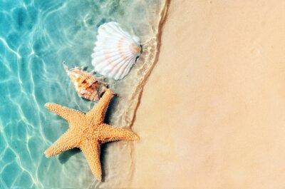 Plakat rozgwiazda i muszla na plaży latem w wodzie morskiej.