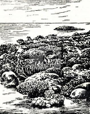 Plakat Różne koralowce podczas odpływu