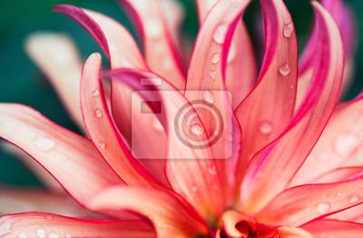 Plakat Różowy kwiat makro