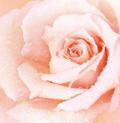 Plakat Różowy na mokro wzrósł tła