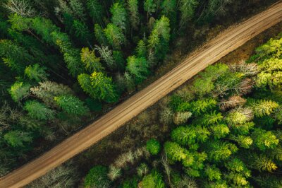 Plakat Rural forest road from above surrounded with green pine tree forest aerial view.