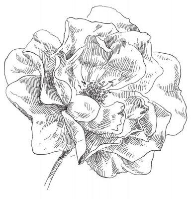 Plakat Rysunek kwiat kwiat ręcznie