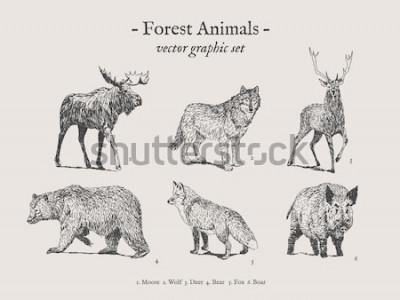 Plakat Rysunki zwierząt leśnych na szarym tle z łosia, wilka, jelenia, niedźwiedzia, lisa, dzika