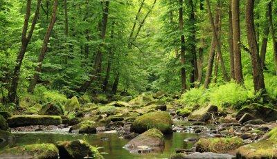 Plakat Rzeka w lesie wiosny