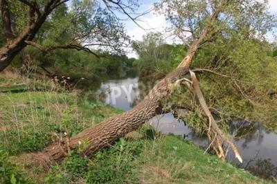 Rzeki Wiosną Drzewa Wiersz Z Drzew Na Brzegu Rzeki Drzewo W Plakaty Redro