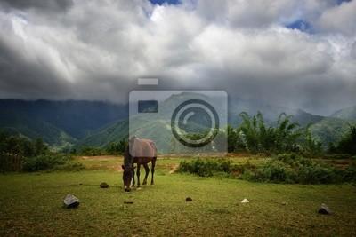 Samotny koń na tle gór