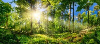 Plakat Scenic forest of deciduous trees, with blue sky and the bright sun illuminating the vibrant green foliage, panoramic view