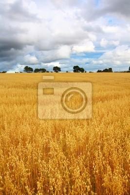 Scenic krajobraz wsi z pola pszenicy