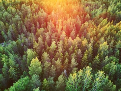 Plakat Scenic top down view of mixed forest in Finnish countryside