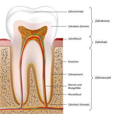 Plakat schematyczny ludzi Ząb Ilustracja eps10
