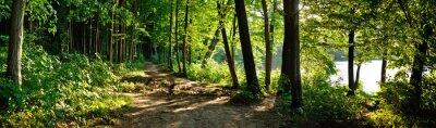 Plakat ścieżka w lesie