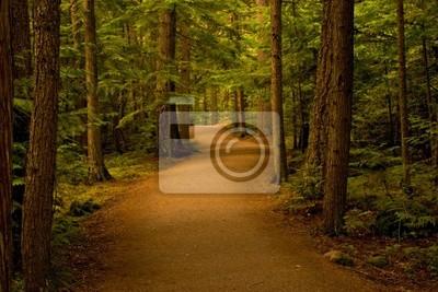 Plakat ścieżka w lesie / lasy