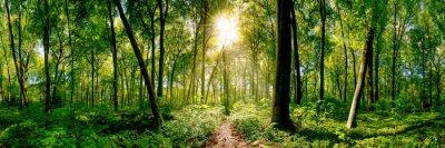 Plakat Ścieżka w lesie oświetlone przez złote promienie słońca