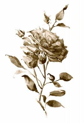 Plakat sepia akwarela róży